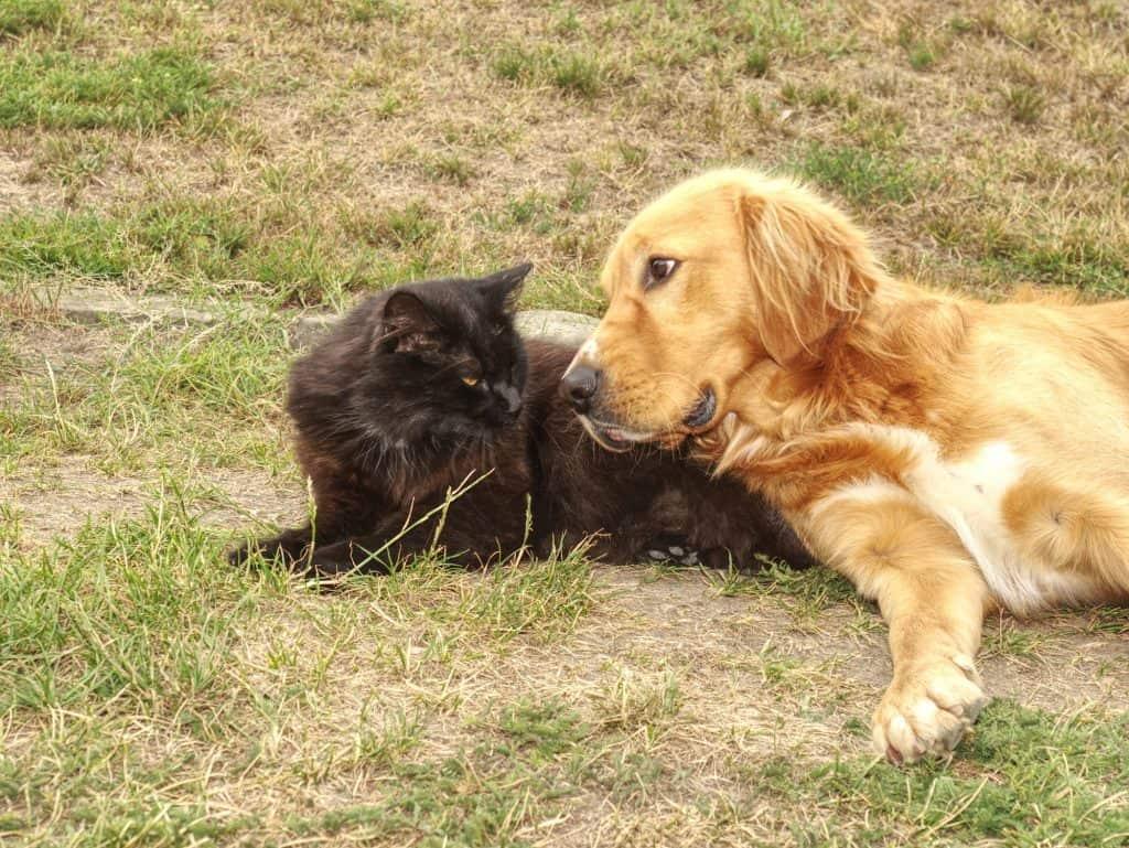 cat staring at dog
