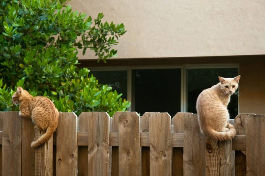 Two cats sitting on a wooden fence
