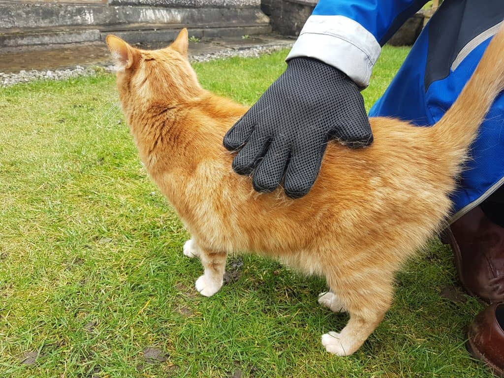 Fudge being brushed with glove