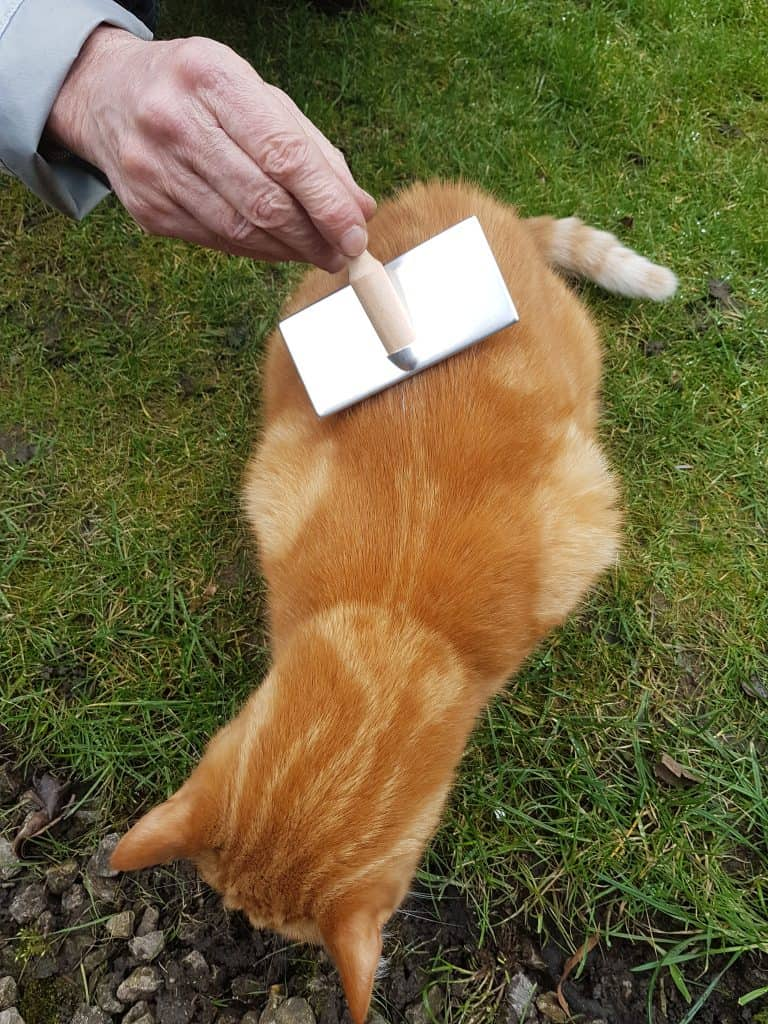 Fudge being brushed with slicker